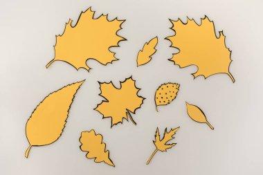various drawn autumnal leaves
