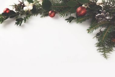 christmas fir branch