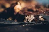 Fotografia Noci in barra di cioccolato
