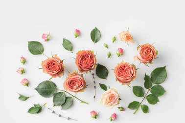 pink rose flowers and petals
