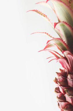 pink pineapple closeup