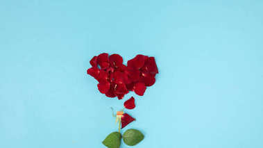 top view of red petals and green leaves arranged in flower isolated on blue