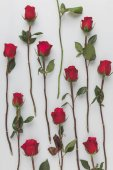 full frame of arranged red roses isolated on white, st valentines day holiday concept