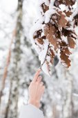 cropped image of woman holding branch with leaves covered with snow in forest