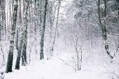 Photo beautiful trees covered with snow in forest