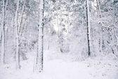krásné stromy pokryté sněhem v lese