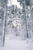 gyönyörű fákkal borított erdő