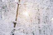 Fotografie Sonne zwischen schneebedeckten Bäumen im Wald