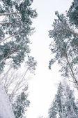 vista inferiore di alberi coperti di neve nella foresta