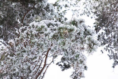 tree branches covered with snow in forest