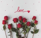 Fotografie Ansicht von oben angeordnete rote Rosen isoliert auf weiss
