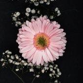růžová gerbera s malými bílými květy na větvičky, samostatný na černém