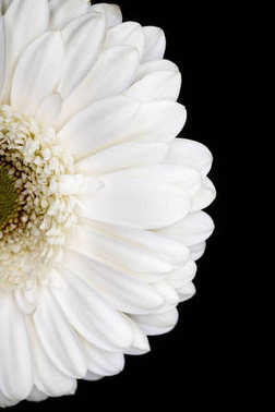 top view of half of white gerbera isolated on black
