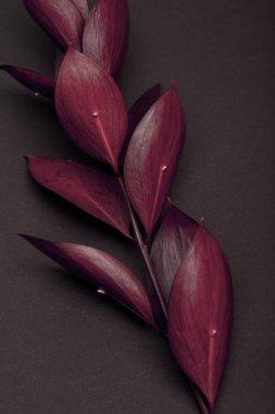 twig with fresh burgundy leaves on brown