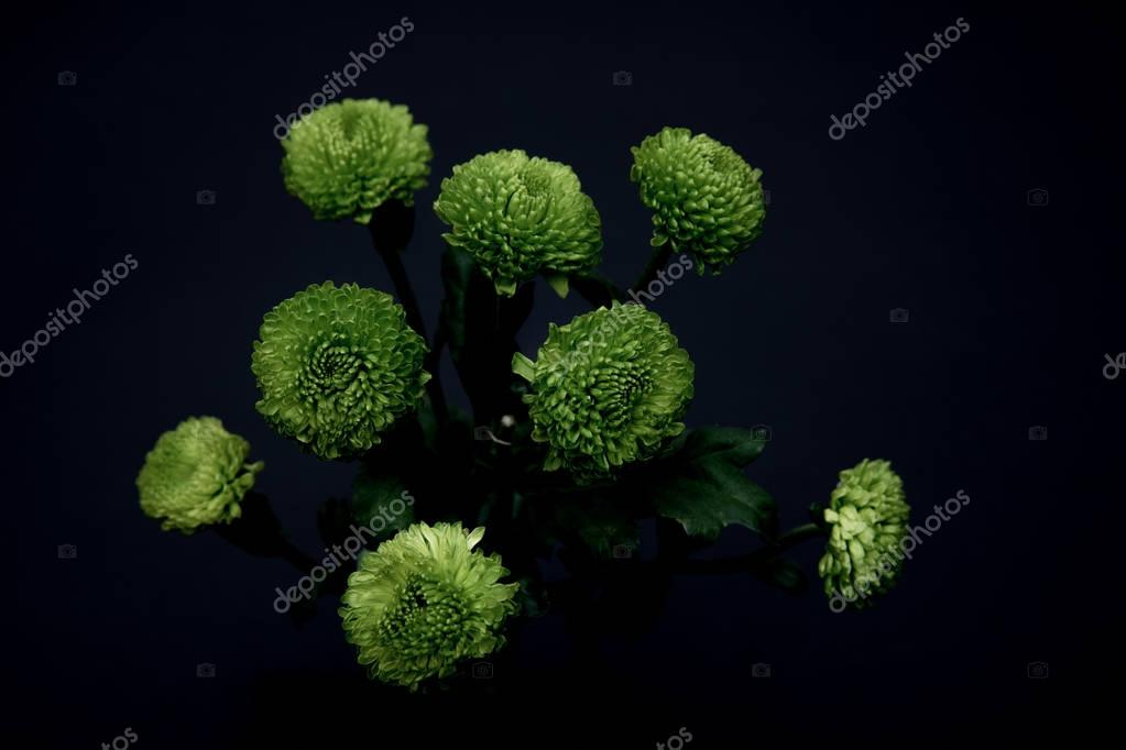 beautiful green flowers isolated on black