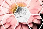 Blick durch transparente Sechsecke auf rosa gerbera