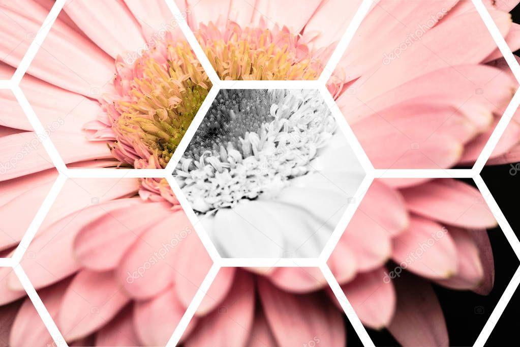 view through transparent hexagons on pink gerbera
