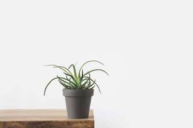 green potted plant on wooden table on white
