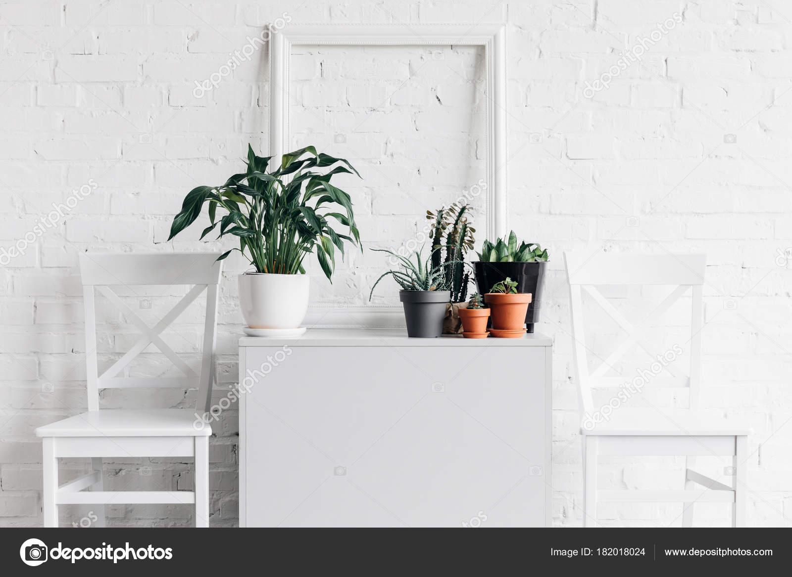 Decoraci n casa con plantas interior delante pared for Plantas de interior precios