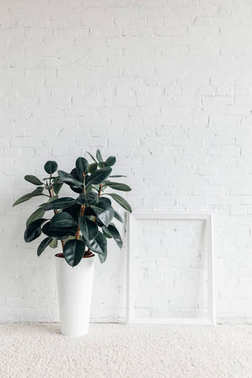 ficus plant with empty frame in front of white brick wall, mockup concept