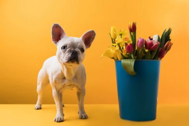 dog standing near bucket with beautiful spring flowers on yellow