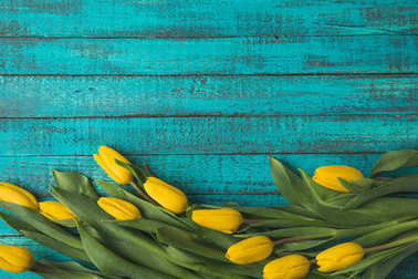 top view of beautiful yellow tulip flowers on turquoise wooden surface