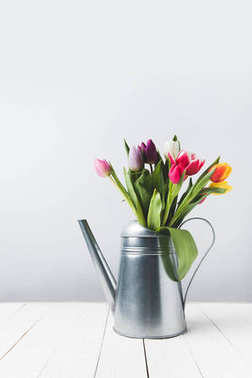 Beautiful colorful tulip flowers in watering can on grey stock vector