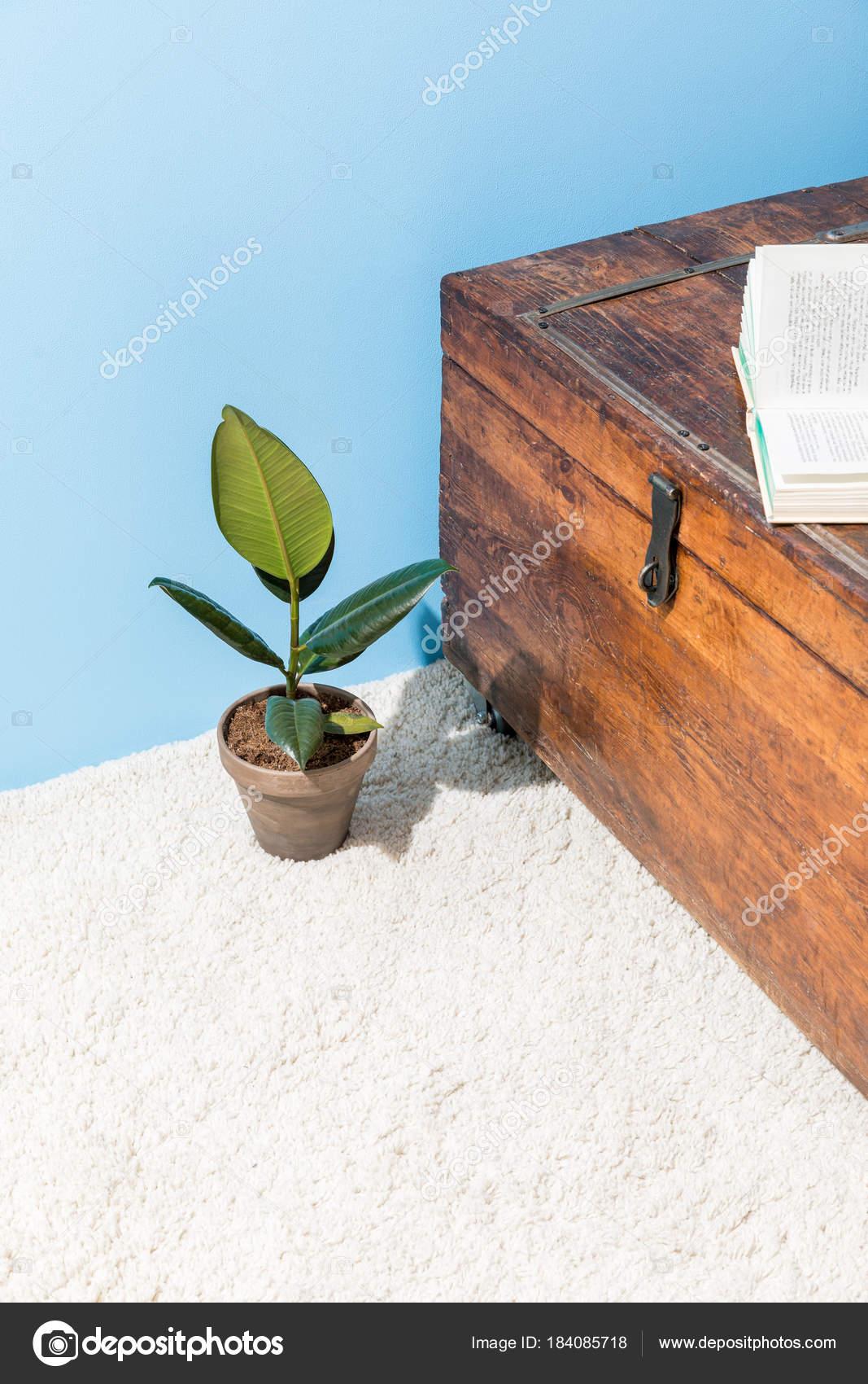 Cofre Madera Vintage Con Abierto Libro Ficus Bote Delante