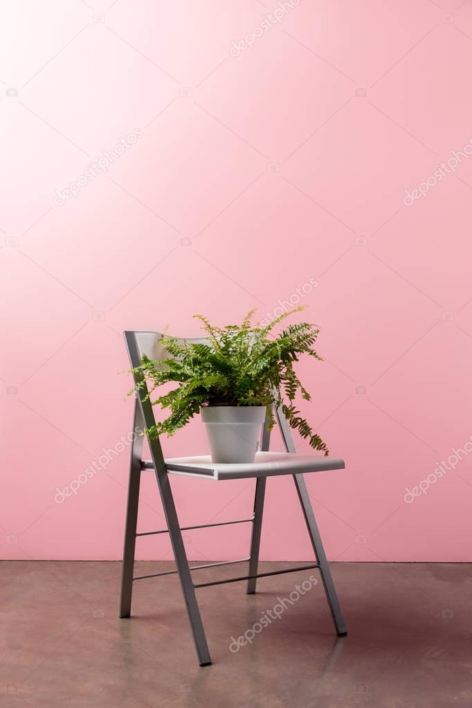 foldable chair with fern pot in front of pink wall