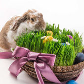 Fotografie Rabbit near basket with grass and painted in different colors eggs, easter concept
