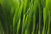 Full frame of green grass stems