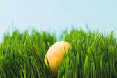 Easter egg painted in yellow color placed on grass, easter concept