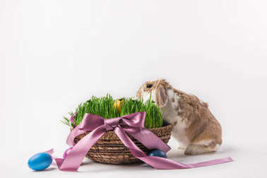 Easter basket with grass and eggs bound by ribbon and rabbit, easter concept