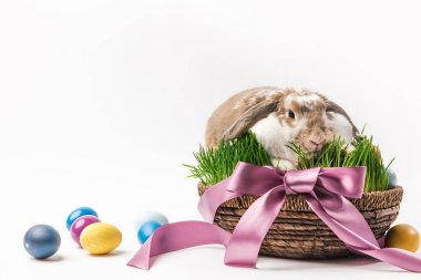 Rabbit sitting in basket bound by ribbon with painted eggs around, easter concept stock vector