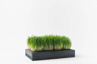 Studio shot of grass stems isolated on white stock vector