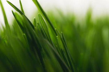 Full frame of green grass stems stock vector