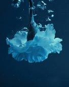 zblízka pohled obalečem květ s bubliny ve vodě