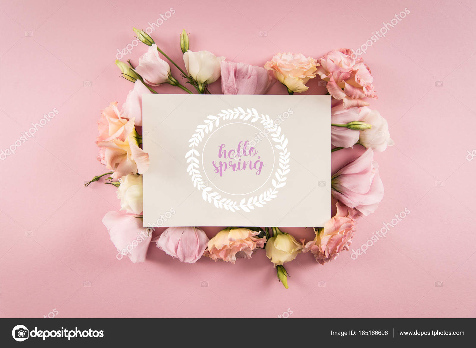 Top View Hello Spring Card Beautiful Blooming Flowers Isolated Pink U2014 Stock  Photo