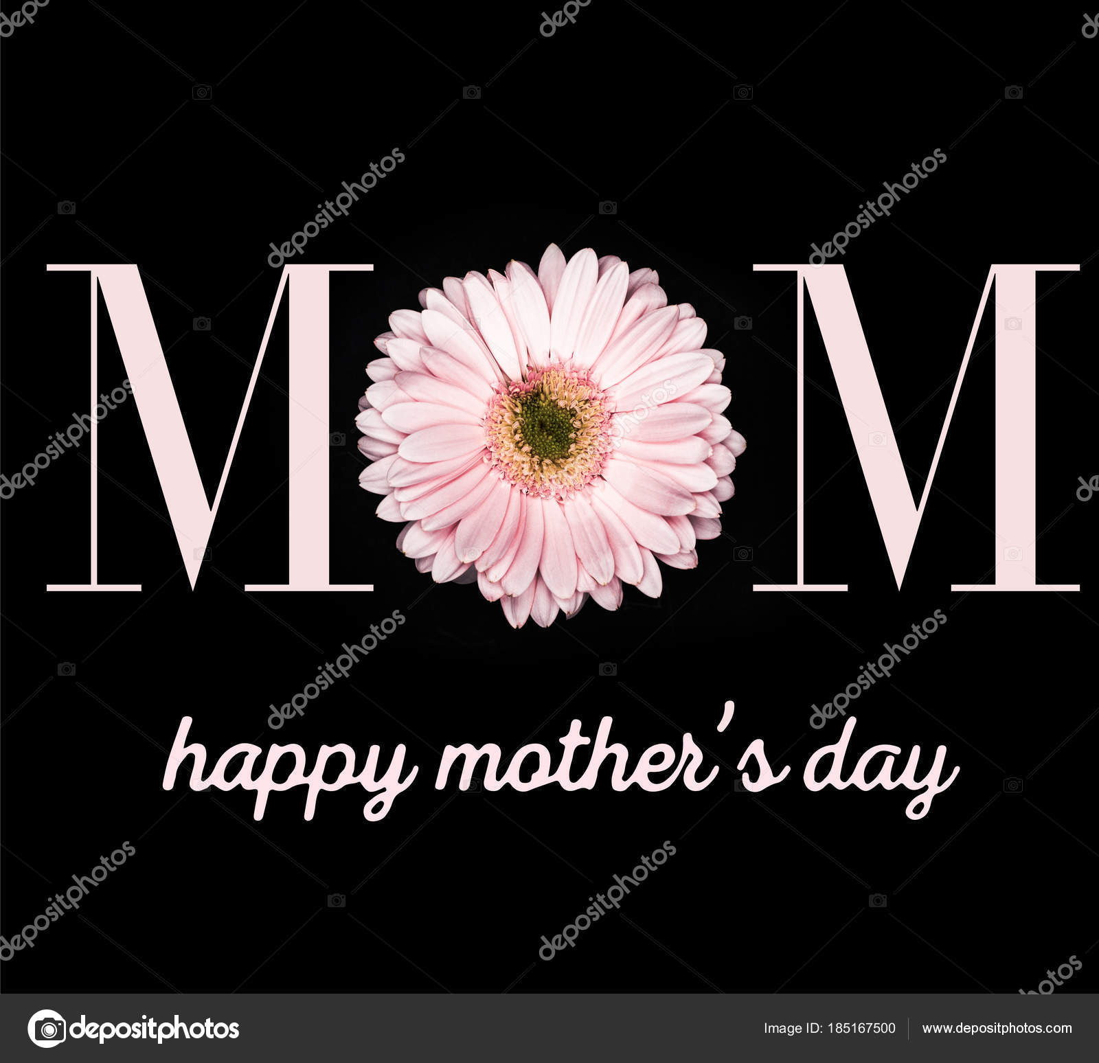 Mothers Day Greeting Card Beautiful Gerbera Isolated Black Stock