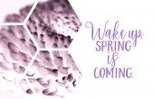 Fotografie Blick durch transparente Sechsecke auf lila Blume mit Wake Up. Frühling steht vor der Tür Inschrift