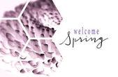 Blick durch transparente Sechsecke auf lila Blume mit Frühlingserwachen Schriftzug isoliert auf weiss