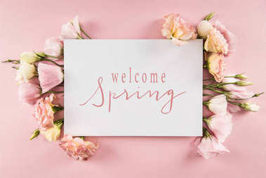 Top view of WELCOME SPRING card and beautiful blooming flowers isolated on pink stock vector
