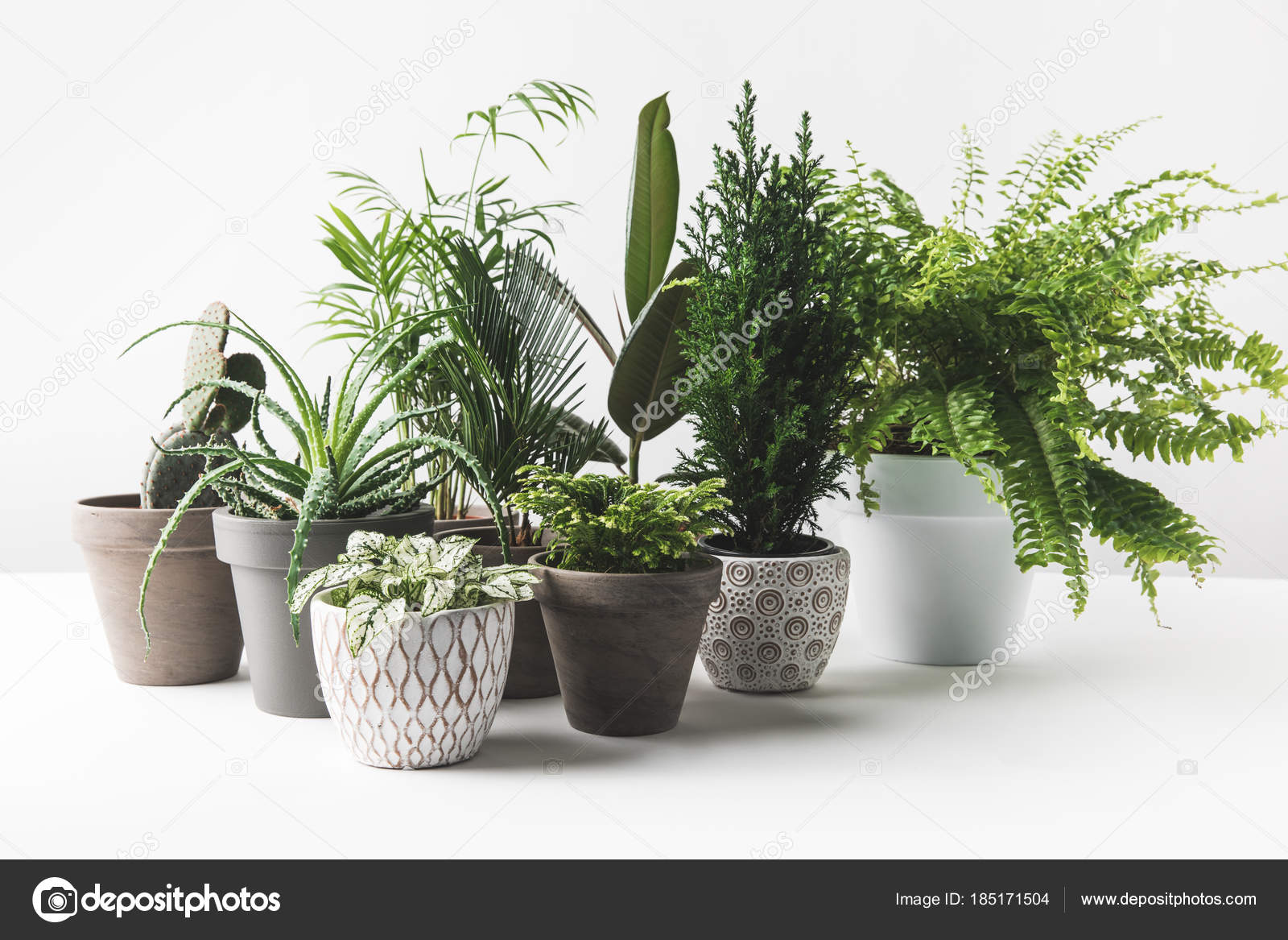Potten Voor Planten.Diverse Mooie Groene Planten Potten Wit Stockfoto C Antonmatyukha