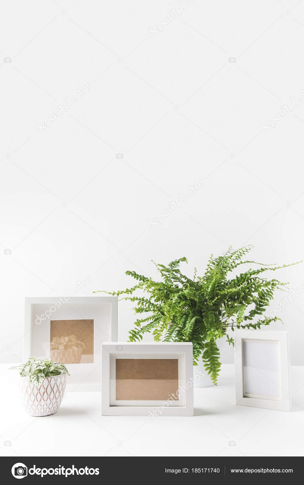 Hermosas Plantas Maceta Verdes Marcos Vacíos Blanco — Fotos de Stock ...