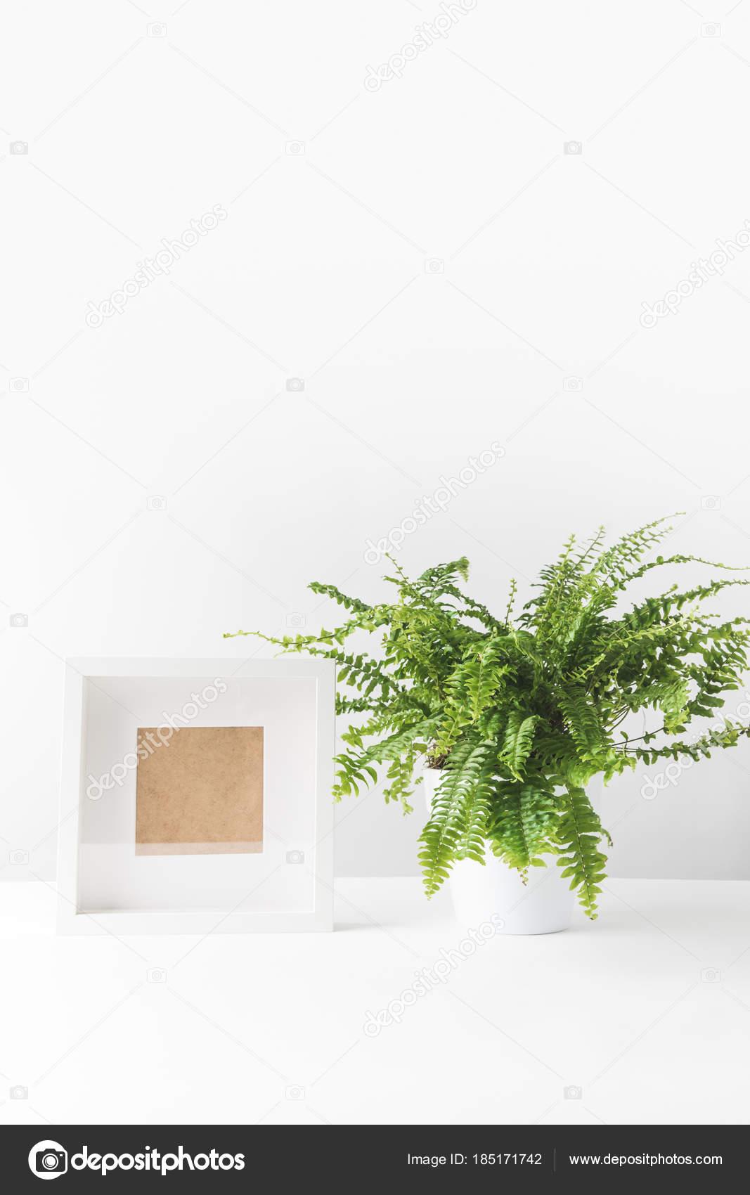 Piękna Zielona Paproć Doniczkowa Puste Ramki Białym Zdjęcie