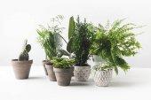 vista ravvicinata di varie piante dappartamento bella verde in vaso su bianco