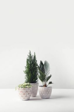 beautiful various green home plants growing in decorative pots on white