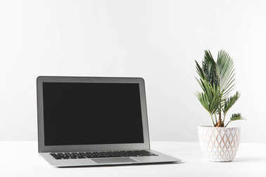 laptop with black screen and beautiful green home plant in pot on white
