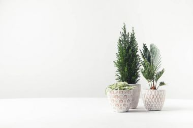 beautiful green home plants growing in decorative pots on white