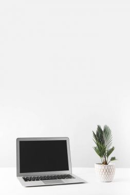 laptop with blank screen and beautiful home plant in pot on white